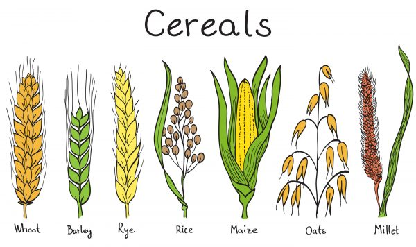 cereal types