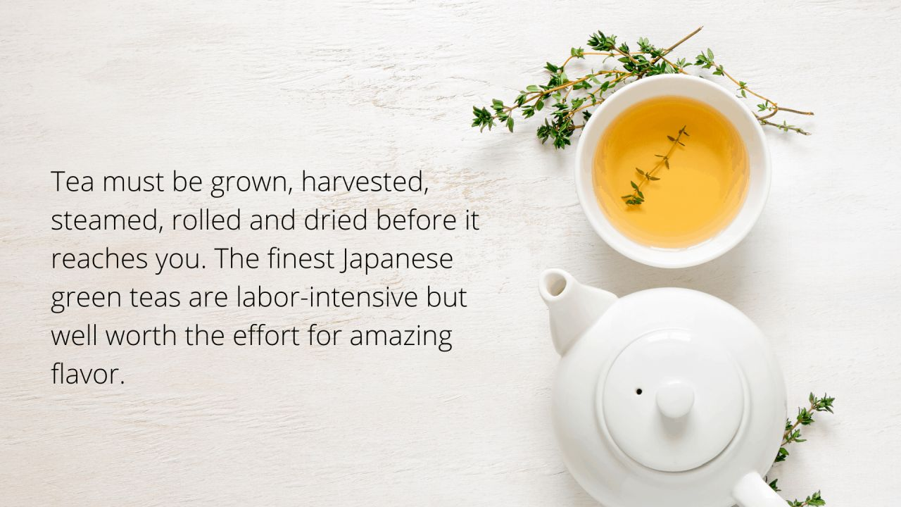 facts about japanese tea