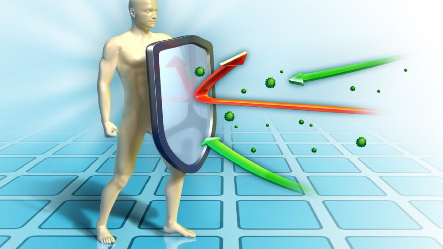 facts about immune system