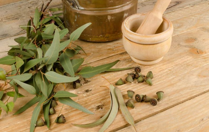 find out all the benefits of eucalyptus oil