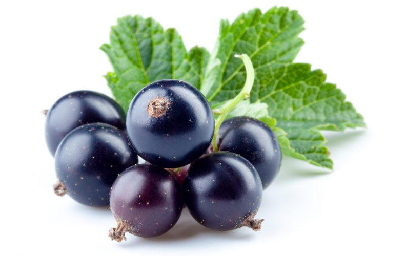 black currants benefits