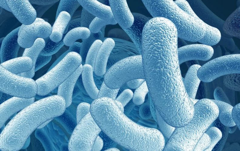 Best Bacillus Supplements Reviewed and Rated