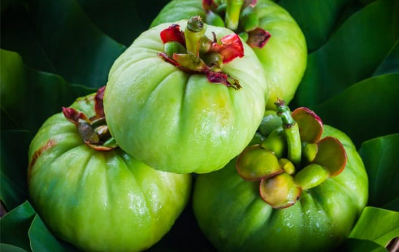 what is Garcinia Cambogia and what are the best brands?