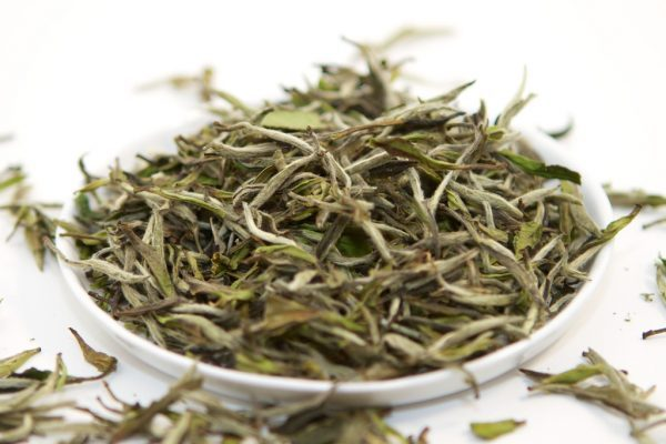 a comparison of the best White teas on the market and benefit of drinking it