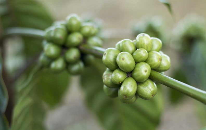 we rated the best green coffee beans for weight loss
