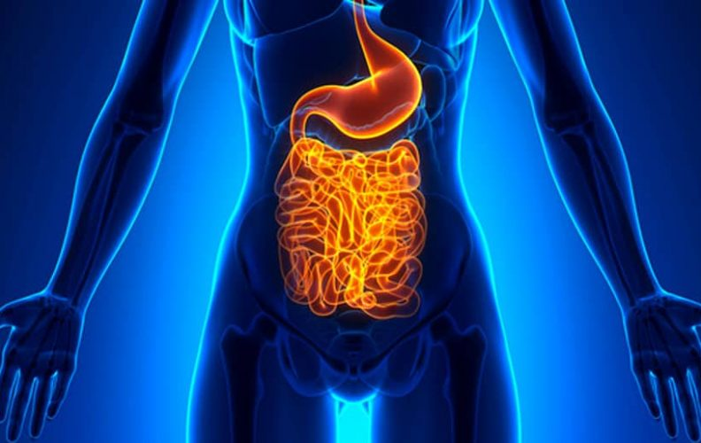 the brain gut connection